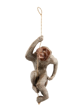 Imagens de Macaco na Corda